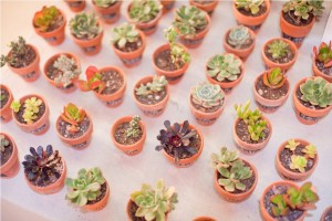 Party Favors- Succulent Plants